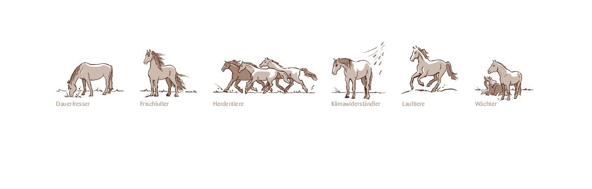 Pferde_Homepage